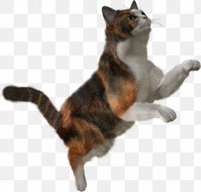 Cat In A Hat - Cat Clip Art Kitten Image PNG