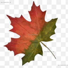 Deko - Maple Leaf Plane Trees PNG