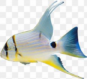 Fish - Fish Image File Formats Clip Art PNG
