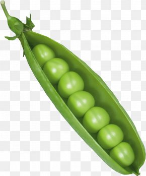Pea - Pea Vicia Cracca Canning Icon PNG
