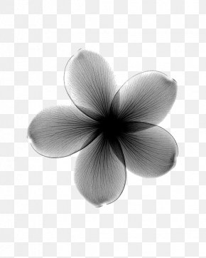 Hazy Black Flowers - Towel Flower X-ray Frangipani Lilium PNG