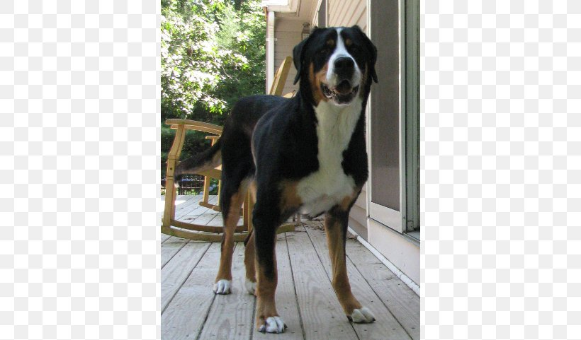 Greater Swiss Mountain Dog Entlebucher Mountain Dog Bernese
