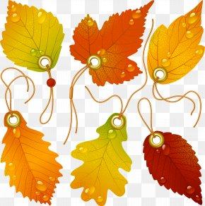 Logo Leaves - Japanese Maple Autumn Leaf Color PNG