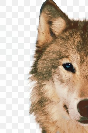 Half Face Design Elements To Pull The Wolf Free - Siberian Husky Arctic Wolf African Wild Dog Animal Blue PNG