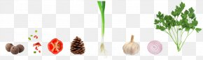 Vegetable Material - Vegetable Garlic Capsicum Annuum Onion PNG