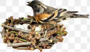 Bird Nest On - Edible Birds Nest Egg PNG