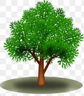 Leaf - Leaf Tree Green Clip Art PNG