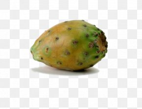 North America Cactus Fruit Stock Image - Barbary Fig Common Fig Opuntia Cochenillifera Embryophyta Cactaceae PNG