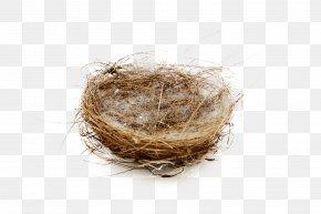 Hay Bird Nest - Edible Birds Nest Bird Nest PNG