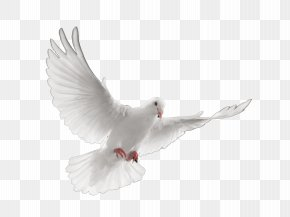 Stroud-Lawrence Funeral Home Cremation Death Funeral Director PNG