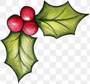 Christmas - Christmas Mistletoe Clip Art PNG