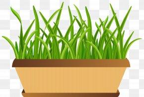 Flowerpot With Grass Transparent Clip Art Image - Flowerpot Clip Art PNG