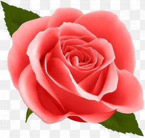 Red Rose Clip Art Image - Flower Rose Clip Art PNG