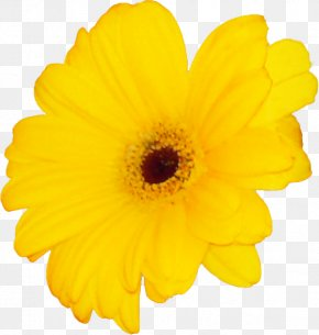 Mother's Day Transvaal Daisy Hug Message PNG