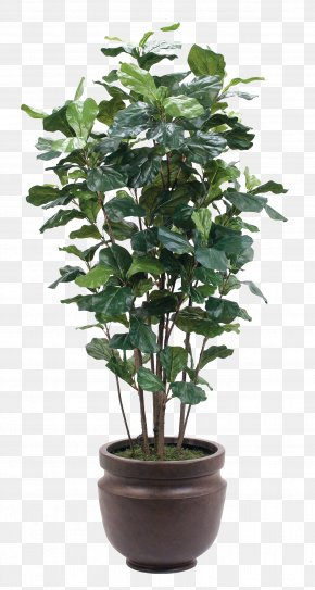 A Pot Of Green Plants - Plant Flowerpot Glass PNG