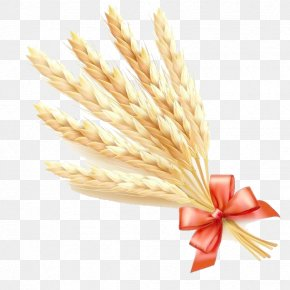 Wheat Cartoon Vector - Common Wheat Ear Cereal PNG