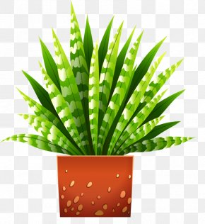 Potted Aloe - Houseplant Flowerpot Illustration PNG