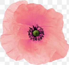 Flower - Poppy Pink Drawing Flower PNG