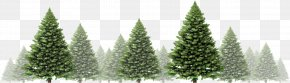 Festive Atmosphere - Christmas Tree Stock Photography Christmas Day Royalty-free Illustration PNG