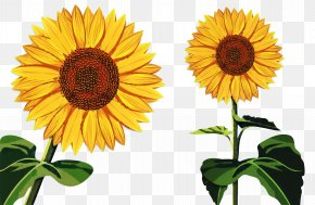 Common Sunflower Pot Marigold Image Photography Sunflower Oil PNG