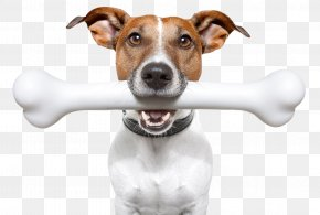 Dog - Dog Stock Photography Puppy Bone Veterinarian PNG