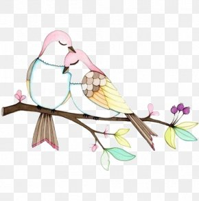 Birds - Lovebird Drawing Illustration PNG