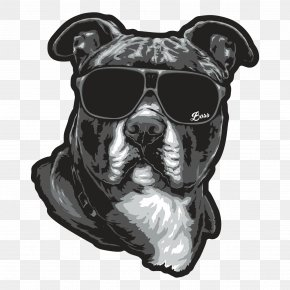 Staffordshire Bull Terrier - Boston Terrier American Staffordshire Terrier Dog Breed Goggles Staffordshire Bull Terrier PNG