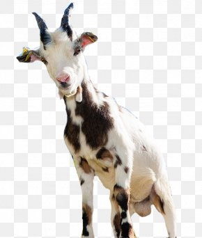 Goat - Goat Sheep Computer File PNG