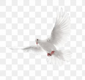 White Flying Pigeon Image - Columbidae Holy Spirit Doves As Symbols PNG
