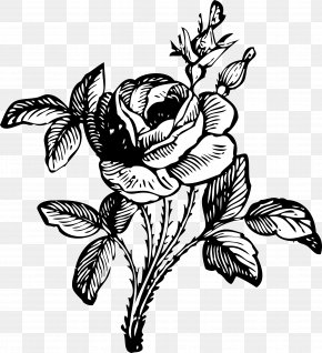 Black And White Rose Drawings - Rose Flower Drawing Clip Art PNG