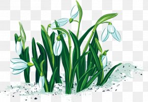 Daffodil - Vector Graphics Image Diploma Download PNG