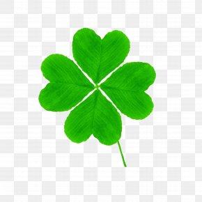 Clover - Four-leaf Clover Saint Patricks Day Clip Art PNG