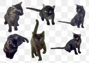 Black Cat - Bombay Cat Korat Burmese Cat Kitten Black Cat PNG