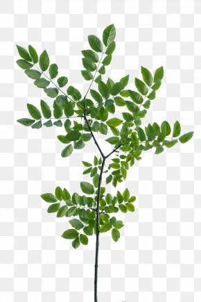 Branch - Texture Mapping Branch Leaf Tree Shrub PNG