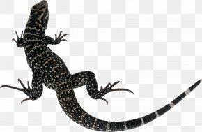 Lizard - Lizard Chameleons PNG