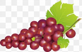 Grape Decoration Design - Grape Seedless Fruit Food PNG