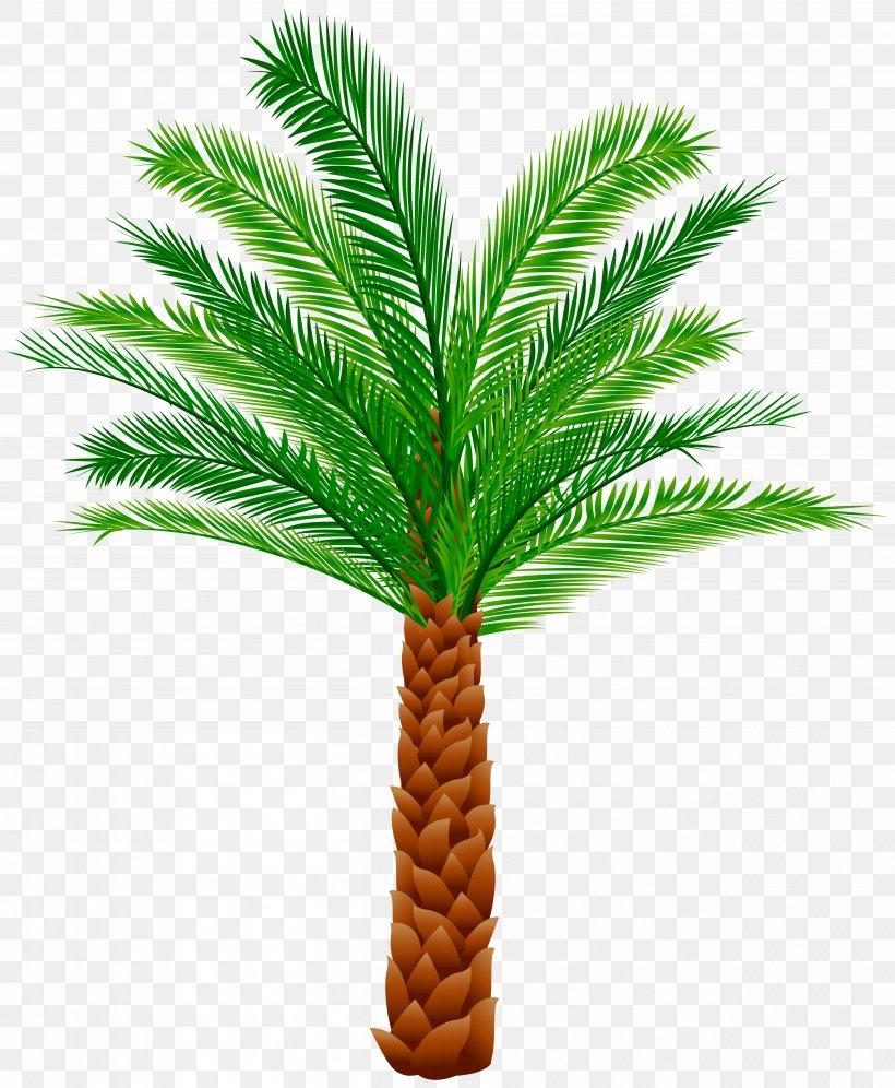 Arecaceae Tree Clip Art, PNG, 5029x6110px, Arecaceae, Arecales, Campervans, Coconut, Date Palm Download Free
