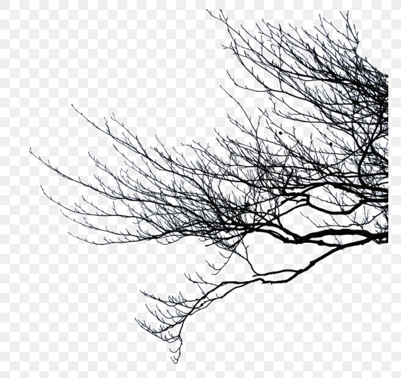 Clip Art Image Branch, PNG, 768x774px, Branch, Art, Artist, Black And White, Drawing Download Free