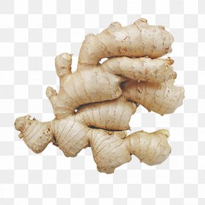 Ginger - Ginger Root Vegetables PNG