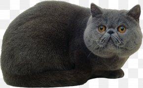 Kitten - Kitten Black Cat Cuteness Tabby Cat PNG