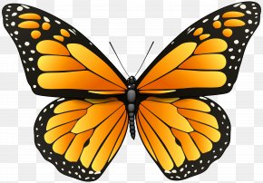CartoonButterfly - Butterfly Coloring Pages For Adults Coloring Book PNG