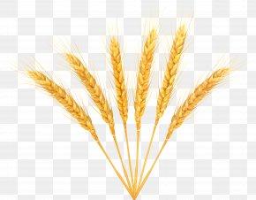 Wheat Decoration Clip Art Image - Wheat Clip Art PNG
