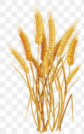 Oats - Common Wheat Ear Cereal Clip Art PNG