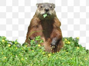 Groundhog Day Eating The Groundhog Garden PNG