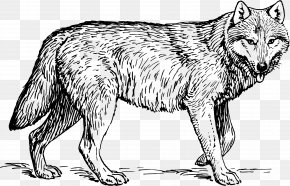 Tiger - Coloring Book Tiger Horse Lion Gray Wolf PNG
