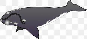 Whales - Whales Cetaceans Killer Whale Image Clip Art PNG
