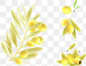 Flowering Plant Flower - Yellow Plant Flower Clip Art Flowering Plant PNG