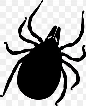 Vector - Tick-borne Disease Lyme Disease Deer Tick Insect Bites And Stings PNG
