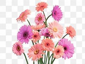 Daisy Family Floral Design - Floral Design PNG