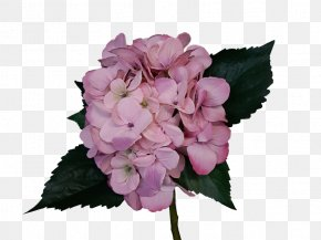 Rose - Hydrangea Cut Flowers Pink Rose PNG